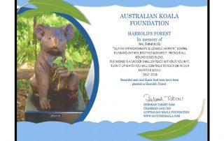 Phil's Koala
