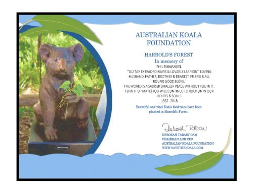 Australian Koala Foundation – Remembering Phil